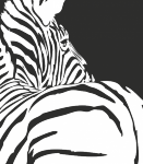 Muursticker zebra C - Muurstickers