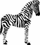 Muursticker zebra - Muurstickers