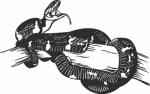 Muursticker slang - Muurstickers